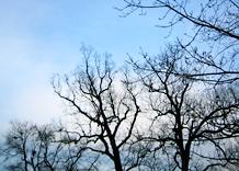 baretrees.jpg