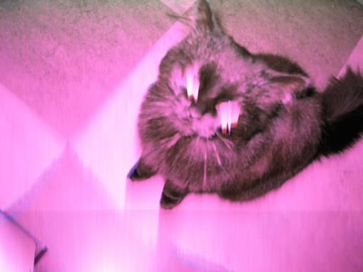 cm_kittyeyes.jpg