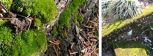moss_spring.jpg
