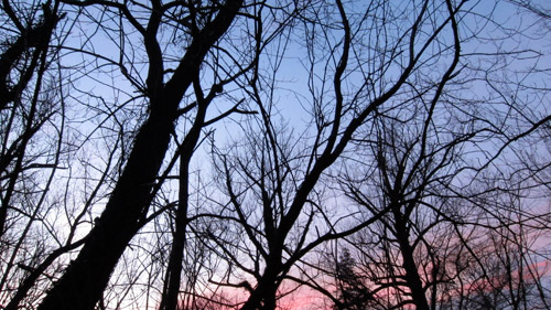Photo of bare trees against a blue pink sky at sunset in winter.